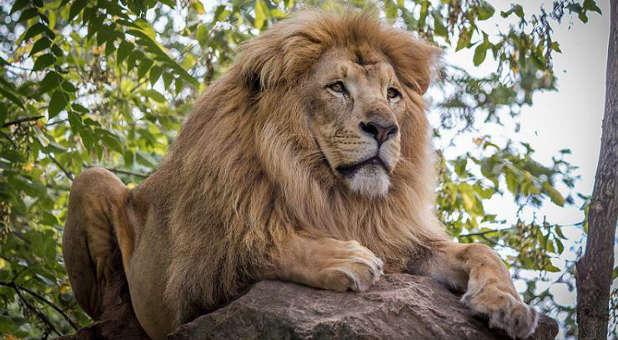 lion-crafty