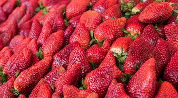 Fruit-bearing